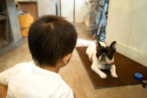 犬を触りたい少年。